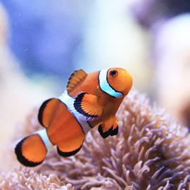 海水魚も、淡水魚も飼育可能 バーズアイ水槽 BIRD'S EYE AQUARIUM