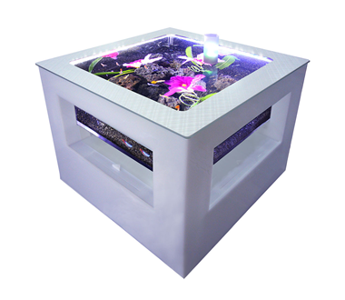 バーズアイ 水槽 テーブル レクタングラ ホワイト BEA-SQU-0606-W